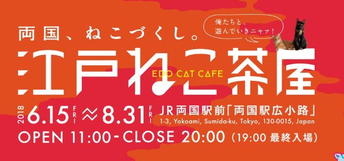 猫カフェの江戸ねこ茶屋行ってきた!【混雑具合、時間、詳しい場所のまとめ】